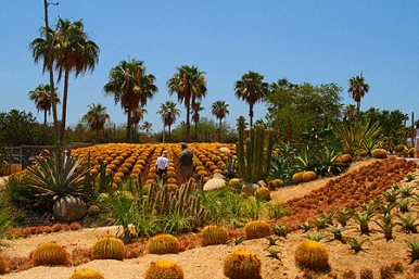 cacti-mundo world, a botanical desert garden in Los Csbos