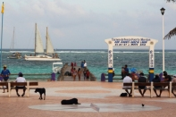 it's a dog day afternoon on the shores of Puerto Morales