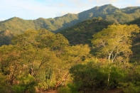 a cloud forest ecosystem located in the mountainous enviroment of baja california sur