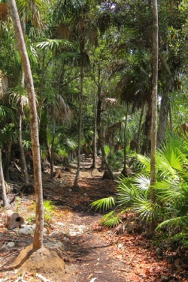 Tropical semi deciduous forest in the coastal environment of Puerto Morales