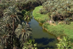 an oasis ecosystem in the desert environment of baja california sur