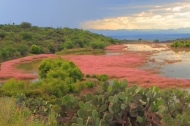 a wetland ecosystem in the mountainous shrubland environment of San Miguel de Allende