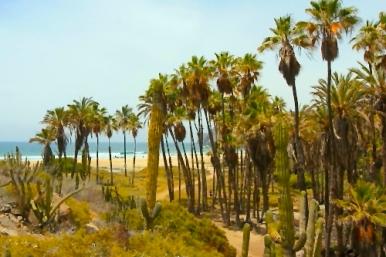 Las Palmas Beach, Todos Santos, Baja California, Best Secluded Beach in Todos Santos