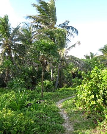 Bike Trail out of the jungle to the beach