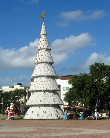 Palacio municipal plaza's Christmas tree