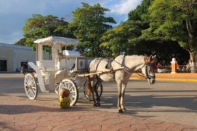 Horse with bonnet and buggy offering rides around centro