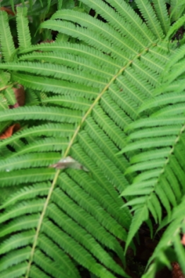 many types of fern are growing in the nursery and garden areas