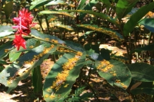 There are many kinds of tropical flowers to discover and some are rare or endangered.