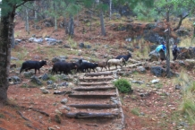 Instead of the zip line you can take the trail back to the parking lot and mingle with the sheep who have also had a rough day of foraging for food in the woodlands