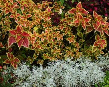 Botanical garden flora