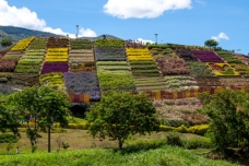 Hills and mountains surround Medellin, known as the city of flowers