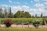 Vineyards of Gran Terrazas