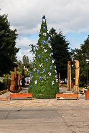 xmas tree in Pucon