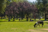 Park Hurtado offers horseback riding for children, outdoor excersize equipment, picnic areas, open fields for sports, a small lake, and trails for walking or joggings