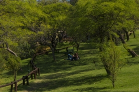 a green meadow in the metropolitan park