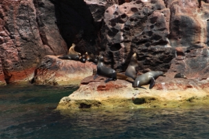 sea lion colony, espiritu santo islands
