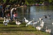 Rose Garden Lake, Palermo Woods
